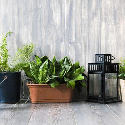 Plant Pots & Troughs