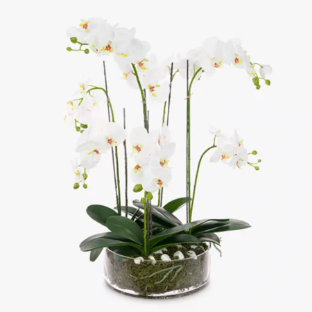 Phalaenopsis in Glass Bowl